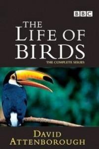 Caratula, cartel, poster o portada de La vida de las aves