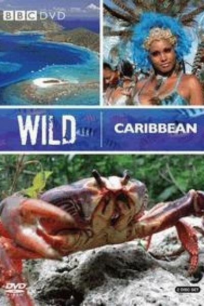 Caratula, cartel, poster o portada de Caribe salvaje