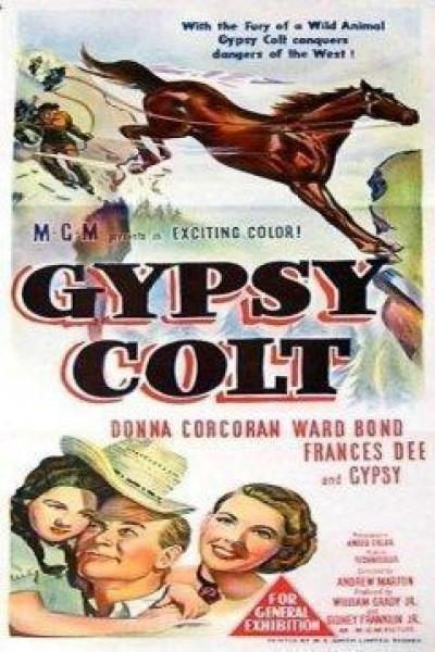 Caratula, cartel, poster o portada de Gypsy Colt