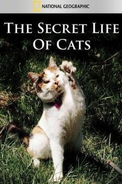 Caratula, cartel, poster o portada de La vida secreta de los gatos