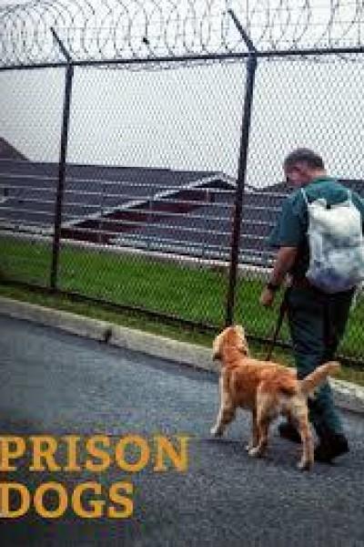 Caratula, cartel, poster o portada de Prison Dogs