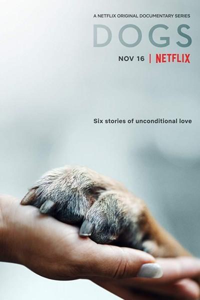 Caratula, cartel, poster o portada de Amigos caninos