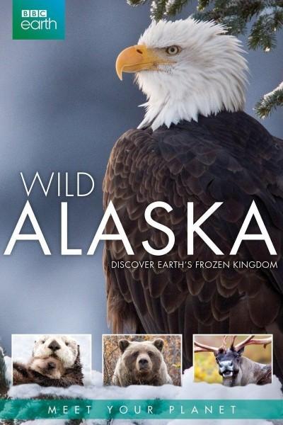 Caratula, cartel, poster o portada de Alaska salvaje