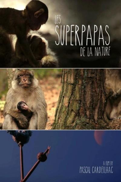 Caratula, cartel, poster o portada de Los súper papás de la naturaleza