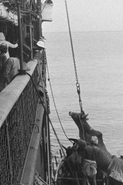 Caratula, cartel, poster o portada de Embarquement d\'un boeuf à bord d\'un navire