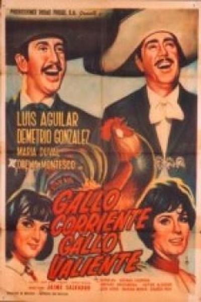 Caratula, cartel, poster o portada de Gallo corriente, gallo valiente