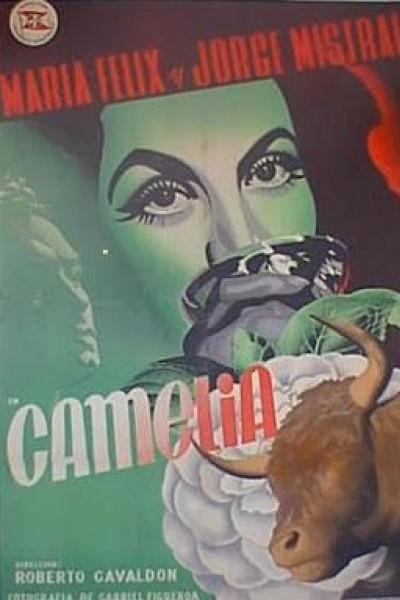 Caratula, cartel, poster o portada de Camelia