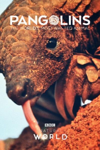 Caratula, cartel, poster o portada de El mamífero más buscado