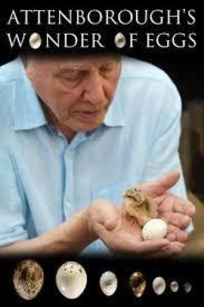 Caratula, cartel, poster o portada de David Attenborough: rompiendo el cascarón