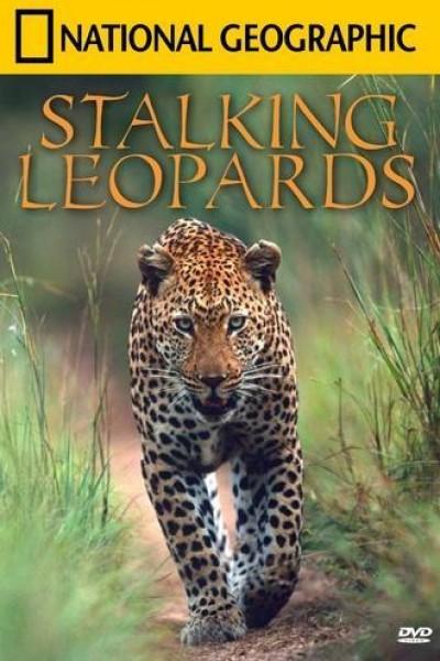 Caratula, cartel, poster o portada de Leopardos al acecho