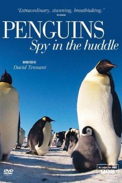 Caratula, cartel, poster o portada de Penguins – Spy in the Huddle