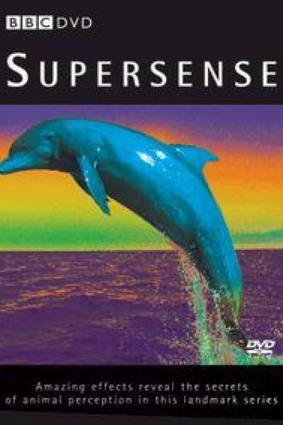 Caratula, cartel, poster o portada de Supersense