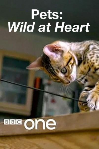 Caratula, cartel, poster o portada de Pets: Wild at Heart