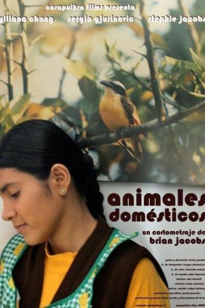 Caratula, cartel, poster o portada de Animales domésticos