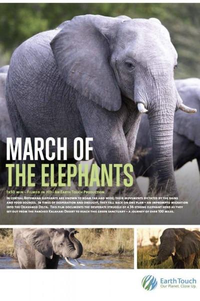 Caratula, cartel, poster o portada de La marcha de los elefantes