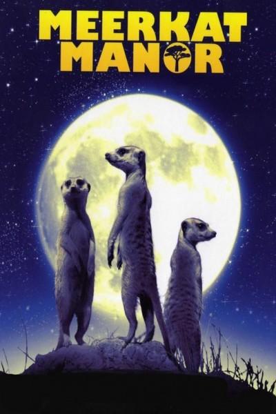 Caratula, cartel, poster o portada de El reino del suricato