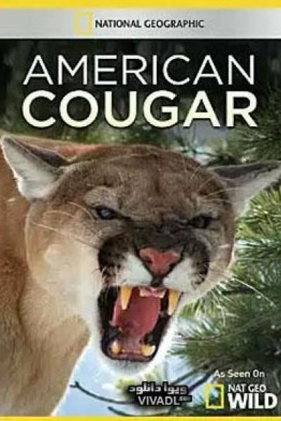 Caratula, cartel, poster o portada de American Cougar