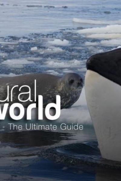 Caratula, cartel, poster o portada de Killer Whales: The Ultimate Guide