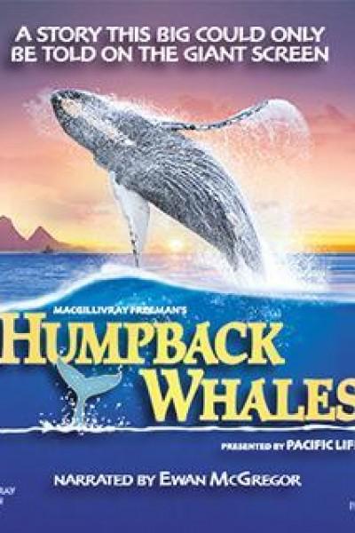 Caratula, cartel, poster o portada de Humpback Whales