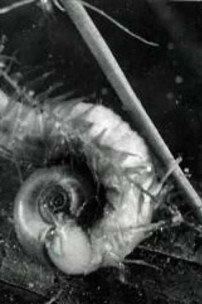 Caratula, cartel, poster o portada de Assassins d\'eau douce
