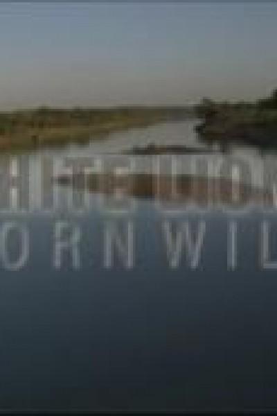 Caratula, cartel, poster o portada de Leones blancos, nacidos salvajes