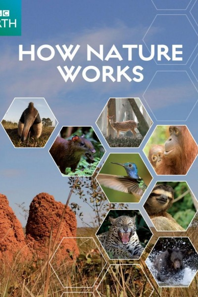 Caratula, cartel, poster o portada de How Nature Works