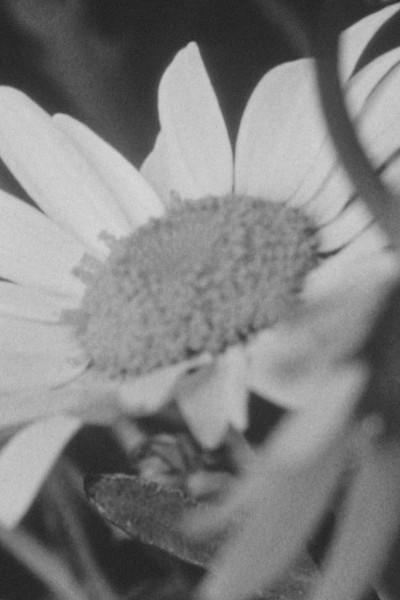 Caratula, cartel, poster o portada de Red Shift