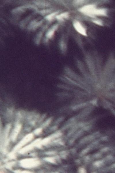Caratula, cartel, poster o portada de Deep In The Mirror Embedded
