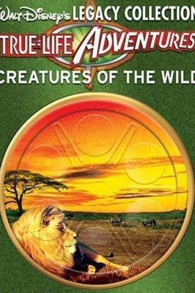 Caratula, cartel, poster o portada de The Olympic Elk