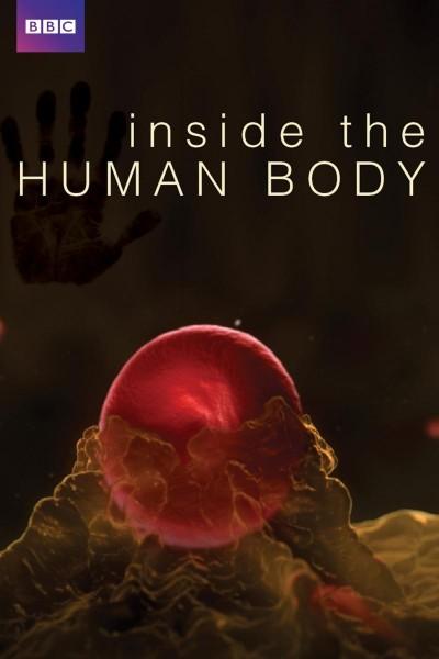 Caratula, cartel, poster o portada de En el interior del cuerpo humano