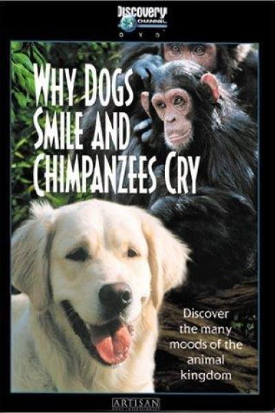 Caratula, cartel, poster o portada de ¿Por qué los perros sonríen y los chimpancés lloran?