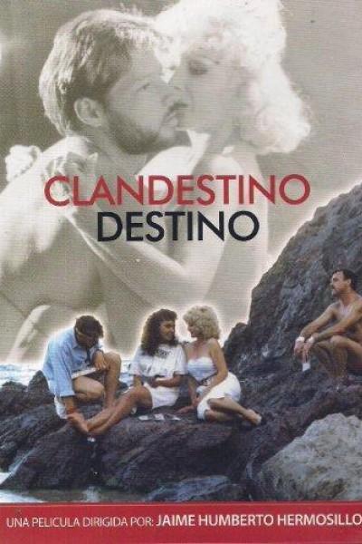 Caratula, cartel, poster o portada de Clandestino destino