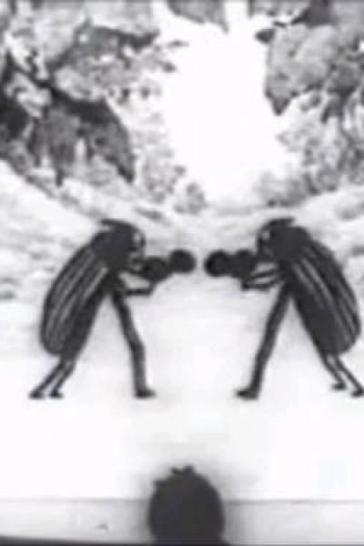 Caratula, cartel, poster o portada de Bug Vaudeville