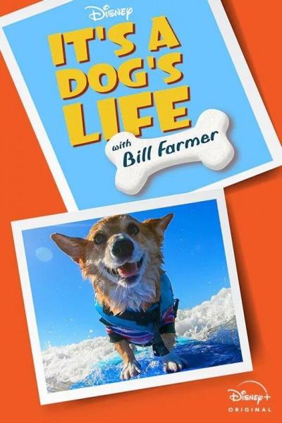 Caratula, cartel, poster o portada de Una vida de perros con Bill Farmer