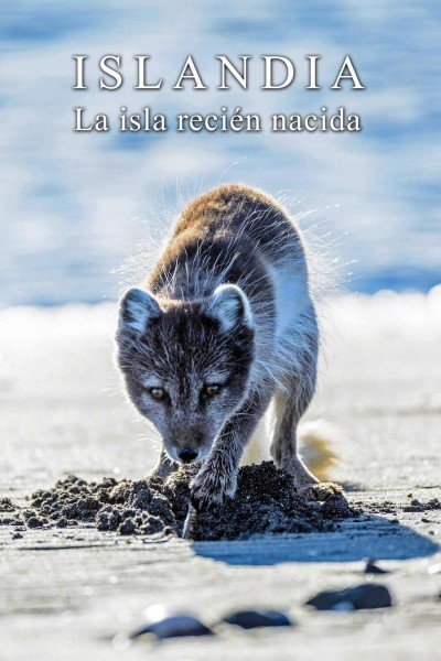 Caratula, cartel, poster o portada de Islandia: la isla recién nacida