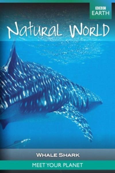 Caratula, cartel, poster o portada de Whale Shark
