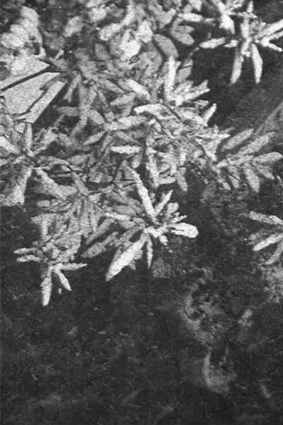 Caratula, cartel, poster o portada de Configuration in Black and White