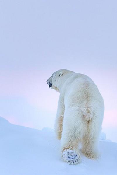 Caratula, cartel, poster o portada de Ghosts of the Arctic