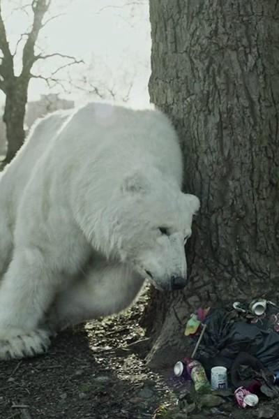 Caratula, cartel, poster o portada de The Homeless Polar Bear