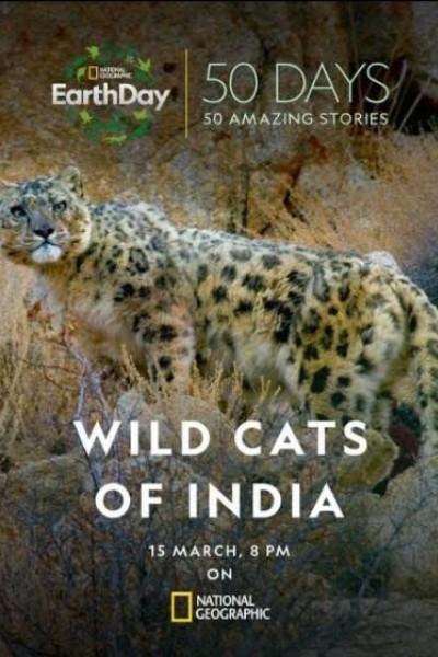 Caratula, cartel, poster o portada de Felinos salvajes de la India