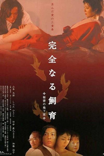 Caratula, cartel, poster o portada de Perfect Education 4: Secret Basement