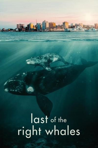 Caratula, cartel, poster o portada de Last of the Right Whales