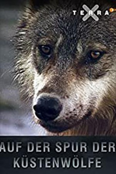 Caratula, cartel, poster o portada de Tras la pista de los lobos costeros de Canadá