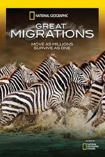 Caratula, cartel, poster o portada de Grandes migraciones