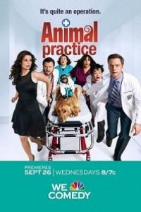 Caratula, cartel, poster o portada de Animal Practice