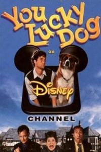 Caratula, cartel, poster o portada de Un perro con suerte